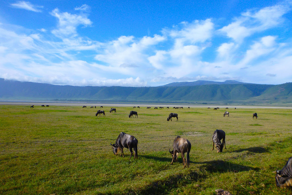 6 Days Tanzania Amazing  Safaris. Lake Manyara N.P, Serengeti Plains, Ngorongoro Crater & Tarangire National Park.